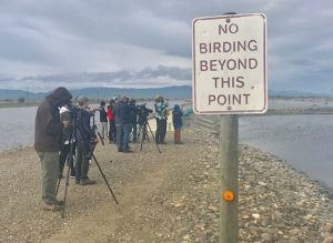 The California Young Birders Club birds on a levee at Modesto Wastewater Treatment Plant.