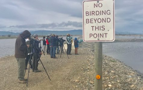 In the Field With the California Young Birders Club