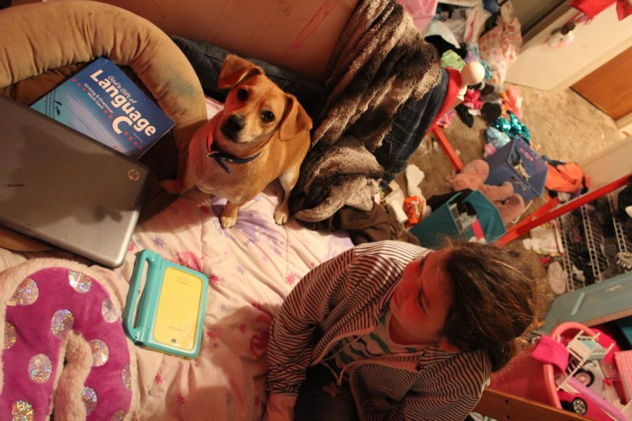 Sarah loves to do work on her bed while laying with her dog.
