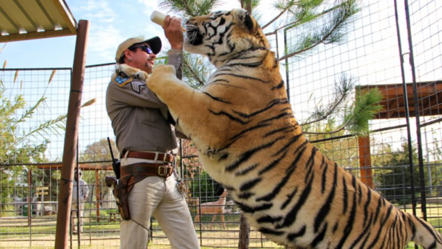 Tiger King: A Look Into the Crazy Life of Big Cat Owners
